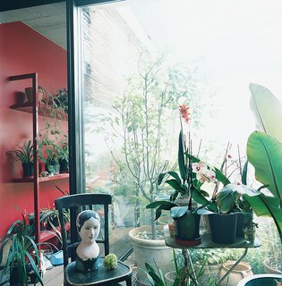 The sun room features an exotic assemblage of tropical plants and ojbets de arte.