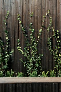 A garden of of small herbs and vines creates a fan of green as the plants creep up the outside walls. What at first seems to be a stark use of artificially dark wood reveals itself to be unironically natural: a soothing and woodsy backdrop for this home in the bustling city.