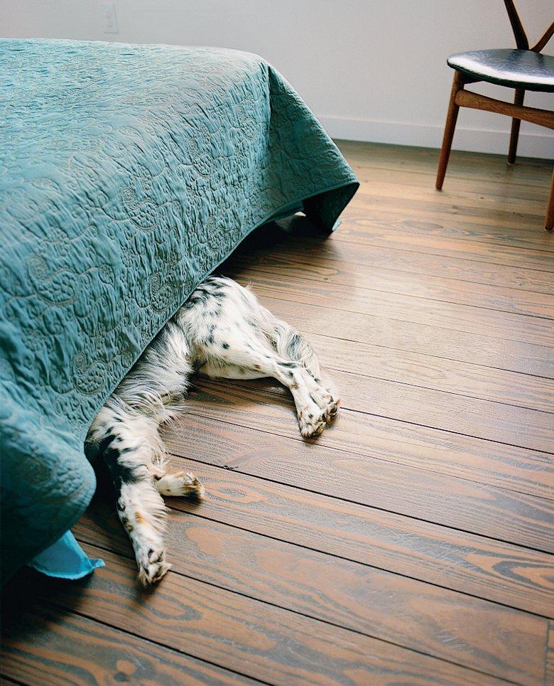 Bedroom, Bed, and Medium Hardwood Floor Angus, the family's Llewellyn Setter, sleeps in the master bedroom.  Photo 11 of 12 in Houston, TX