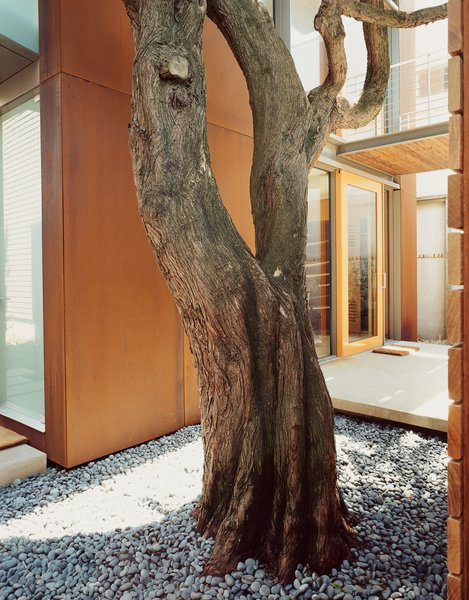 Aidlin Darling took pains during construction to preserve the cypress trees that give the Great Highway House so much of its charm.