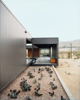 Desert Utopia - Photo 5 of 9 - Ocotillo was placed in key areas as a great structural focal point.