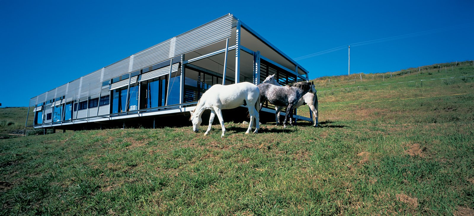 """There's a lot of horse talk here, and with this place there is plenty of opportunity for   interaction. My horses can play Mister Ed and join right in,"" says Kropach. Her inquisitive Andalusian steeds regularly socialize with guests via sliding windows along the house's main north-facing elevation.  Photo 4 of 4 in Green Acres"