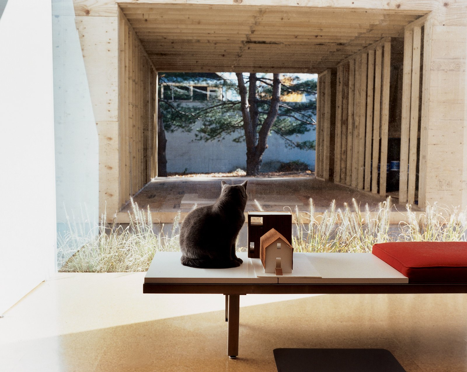 Seated on a George Nelson bench, feline resident Miu Miu gazes through the east picture window at the ongoing construction. Sharing the bench is a quarter-inch-to-one-inch-scale model of the house and addition.  Photo 1 of 11 in New Beginnings