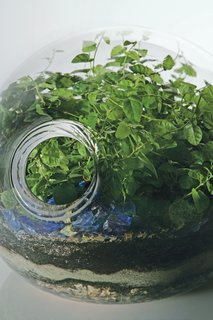 """A close-up of a custom blown- glass terrarium offers a microcosmic view of one of Hayes's lushly overgrown landscapes. Hayes produces her silicone planters in five sizes, two styles (""""classic"""" and """"eccentric""""), and five standard color options."""
