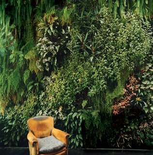 The indoor garden wall Patrick Blanc created for his friends the Dimanches is so lush, it's almost as if someone has plopped an easy chair down in the middle of a forest.