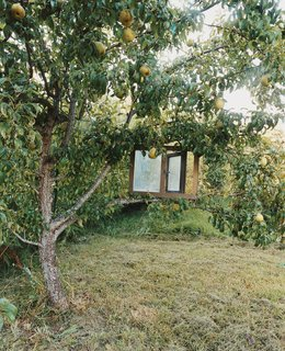 The outstretched arms of a pear tree cradle an old window frame.
