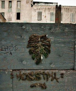Unauthorized Moss Art - Photo 1 of 5 -