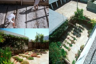 The Crack Garden in San Francsico, California, designed by CMG Landscape Architecture, winner of the New Practices San Francisco 2009 competition.