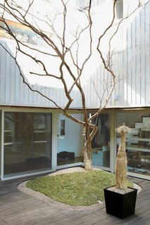 Honoring the traditional Korean residence and its typical interior courtyard, this modern wood-and-concrete home in South Korea seamlessly plays with interior and exterior spaces with its glassed-in interior yard. A single crepe myrtle provides life during the winter and color and shade in the summer.