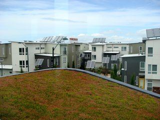 An overhead view of the rooftops shows the many solar panels in the development. Far in the distance is the Sunshine Biscuits factory and in the foreground is the green roof atop the apartment building.