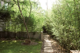 Bamboo dominates the rest of the yard, where Rick planted three different kinds: golden, variegated, and moso.