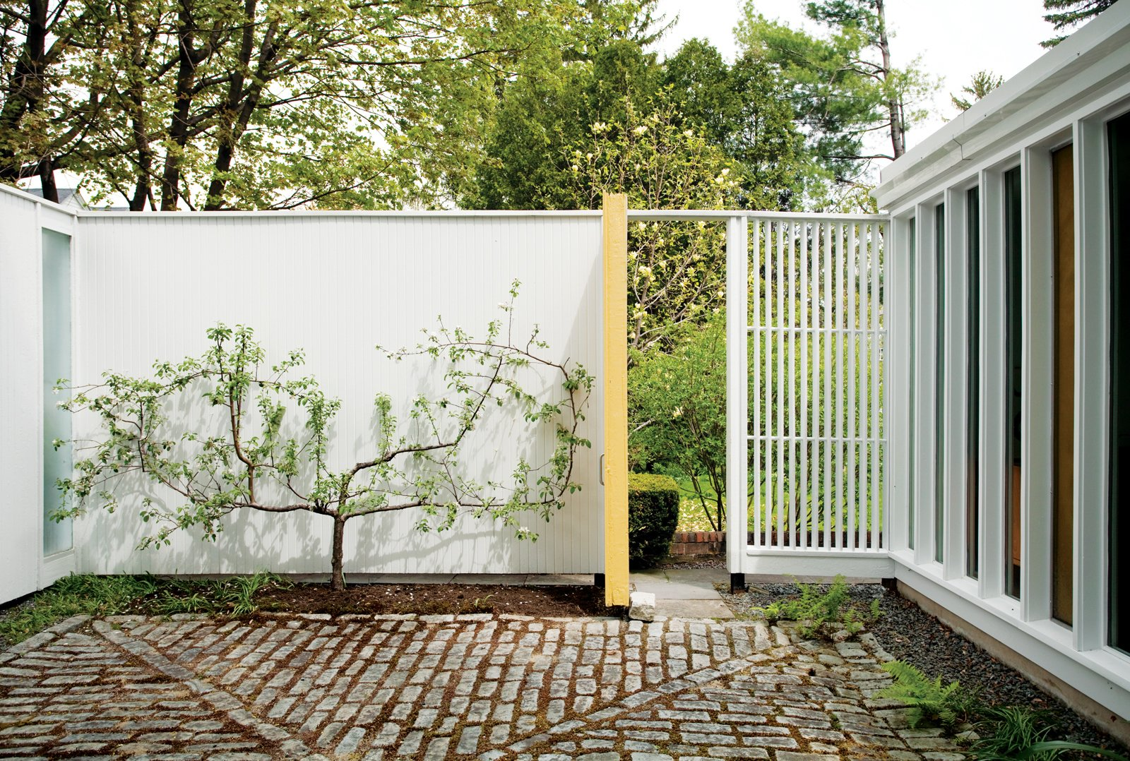 """Isaacson """"borrows the view"""" of a neighbor's magnolia on the adjacent property by propping open the side door. His own espaliered apple tree makes the most of limited space.  Photo 2 of 8 in The House of a Lifetime"""