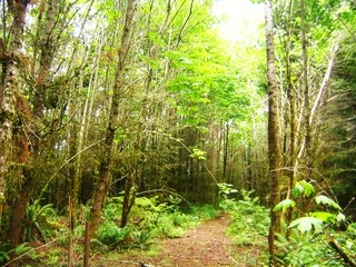 Existing logging road. Note overgrown forest and lack of light.