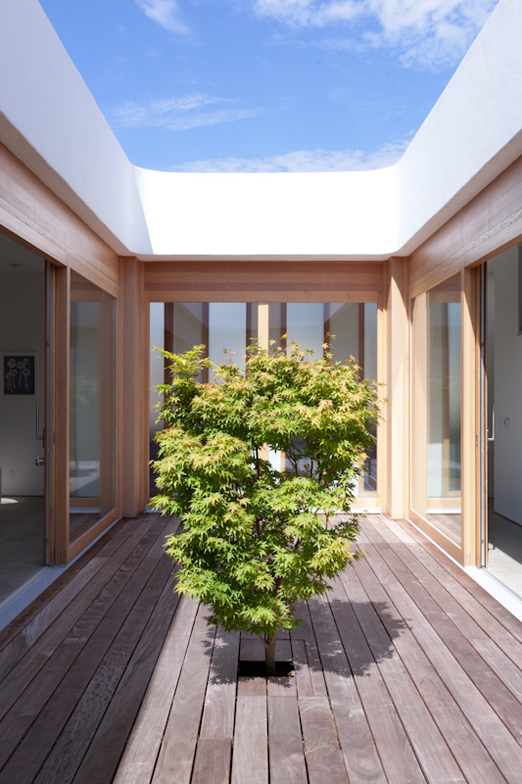 The Japanese maple gives the courtyard its peaceful character.  Photo 18 of 19 in Looking Inward