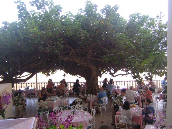 Photo 4 of 5 in Hau Tree Lanai in Honolulu