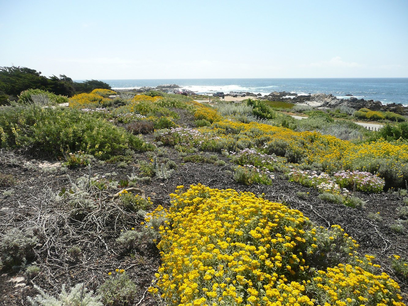 Pacific Grove Dune Restoration by John Wandke.  Photo 7 of 11 in Rana Creek: The Design Firm Bringing Architecture to Life