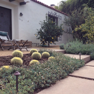 @stevesiegrist: Drought tolerant garden in Santa Monica that we completed about 18 months ago. Growing in nicely.