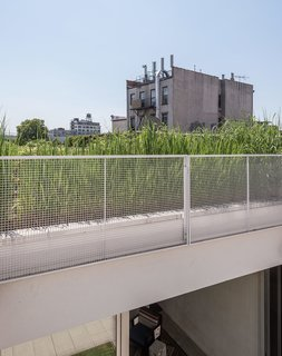 Vegetation from the garden on the lower roof provides a contrast to the backdrop of Gowanus's rapidly changing landscape.