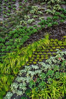 A Green Wall in Silicon Valley - Photo 1 of 2 -