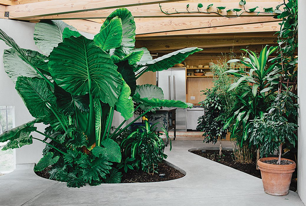 Outdoor, Gardens, Hardscapes, and Walkways Cut-outs in the concrete slab floor allow for an indoor forest of taro, fig, and bamboo; a sub-surface drain connected to a perforated underground pipe slowly filters out excess moisture to the groundwater. The cabinets were custom designed by Nick Damner, while the refrigerator and dishwasher are by Thermador  Photo 2 of 5 in This Home is Complete with an Indoor Jungle
