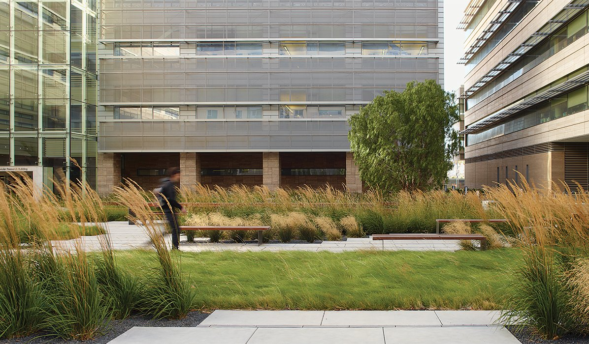 Landscaping served myriad functions at the UCSF Smith Cardiovascular Research Building: to reduce stormwater runoff, buffer winds, create urban wildlife habitat, and foster conections between the city and campus.  Photo 4 of 4 in Andrea Cochran's Bold Landscape Designs Are Natural Wonders