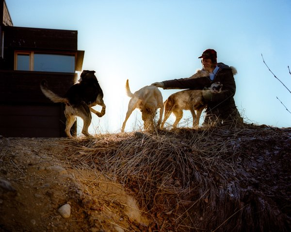 Dogs about at the house and Buser, a four-time winner of the Iditarod dogsled race, routinely takes 80-mile rides with his hounds.
