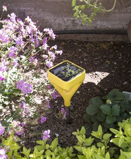 Willson uses Edyn, a smart garden sensor, to track moisture, temperature, fertilizer, and sunshine levels. It automatically updates irrigation patterns based on its findings.