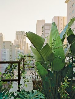 Amazing Garden Oasis in São Paulo Born from a Five-Year Search and Renovation - Photo 2 of 15 - On the terrace, plants, vines, and pergolas form a barrier against the city's notorious noise and pollution.