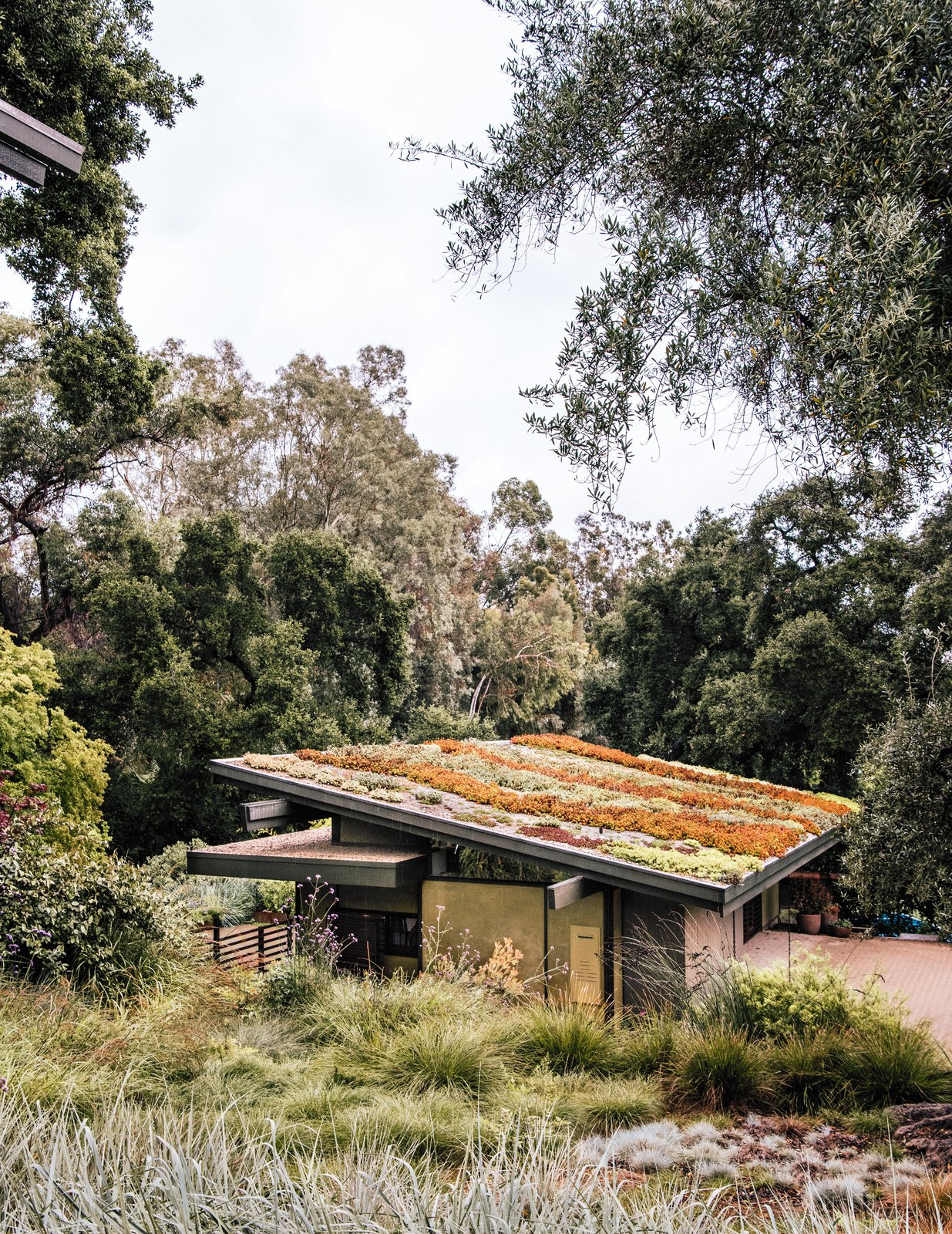 Exterior, House Building Type, Shed RoofLine, and Green Roof Material The sloped roof of Carlton's art studio grows a colorful mix of sedum species.  Photo 13 of 14 in Creative Revival of a Modernist Gem