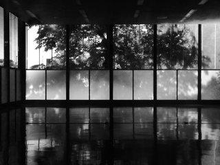 The Modernist's Tree