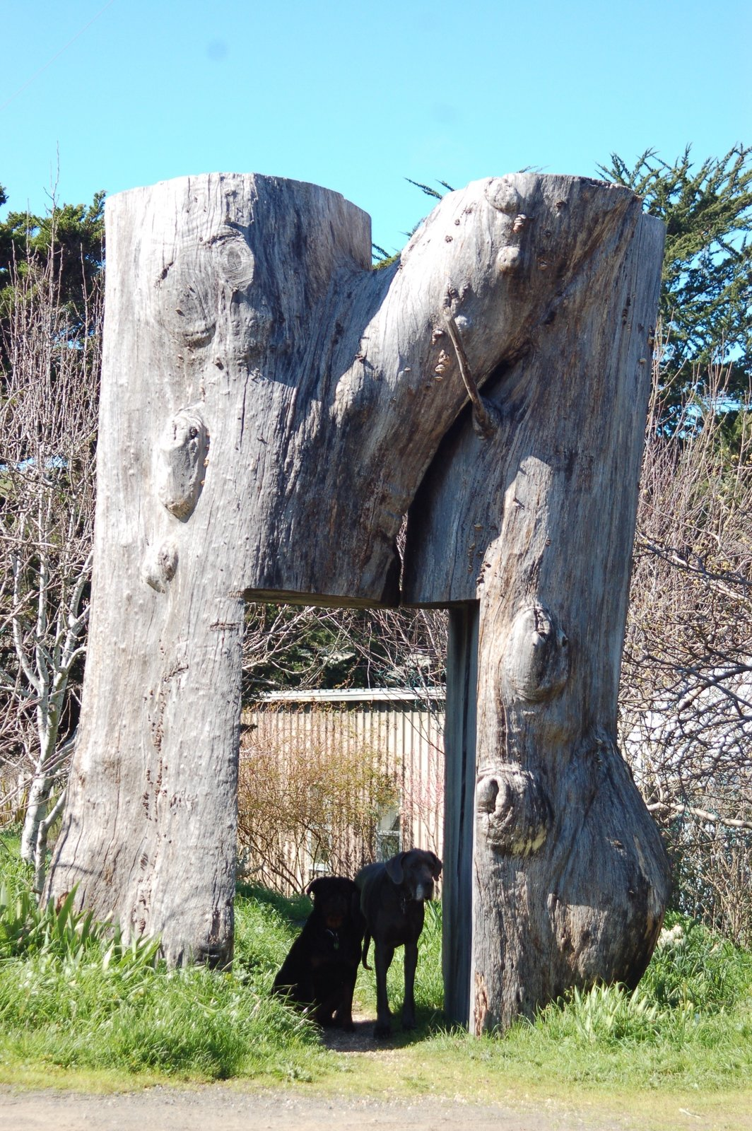 Wood sculpture by David Nash.  Photo 1 of 10 in Creatives of the Bay Area Series: Evan Shively and Madeleine Fitzpatrick