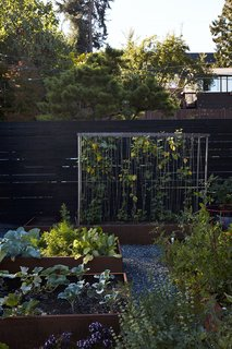 In the garden, vines of honeysuckle are intertwined on a steel-mesh trellis.