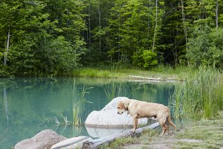 The 10-acre property offers ample terrain for the family and pets to explore. Otis examines the pond, which was deepened to 20 feet and stocked with trout.