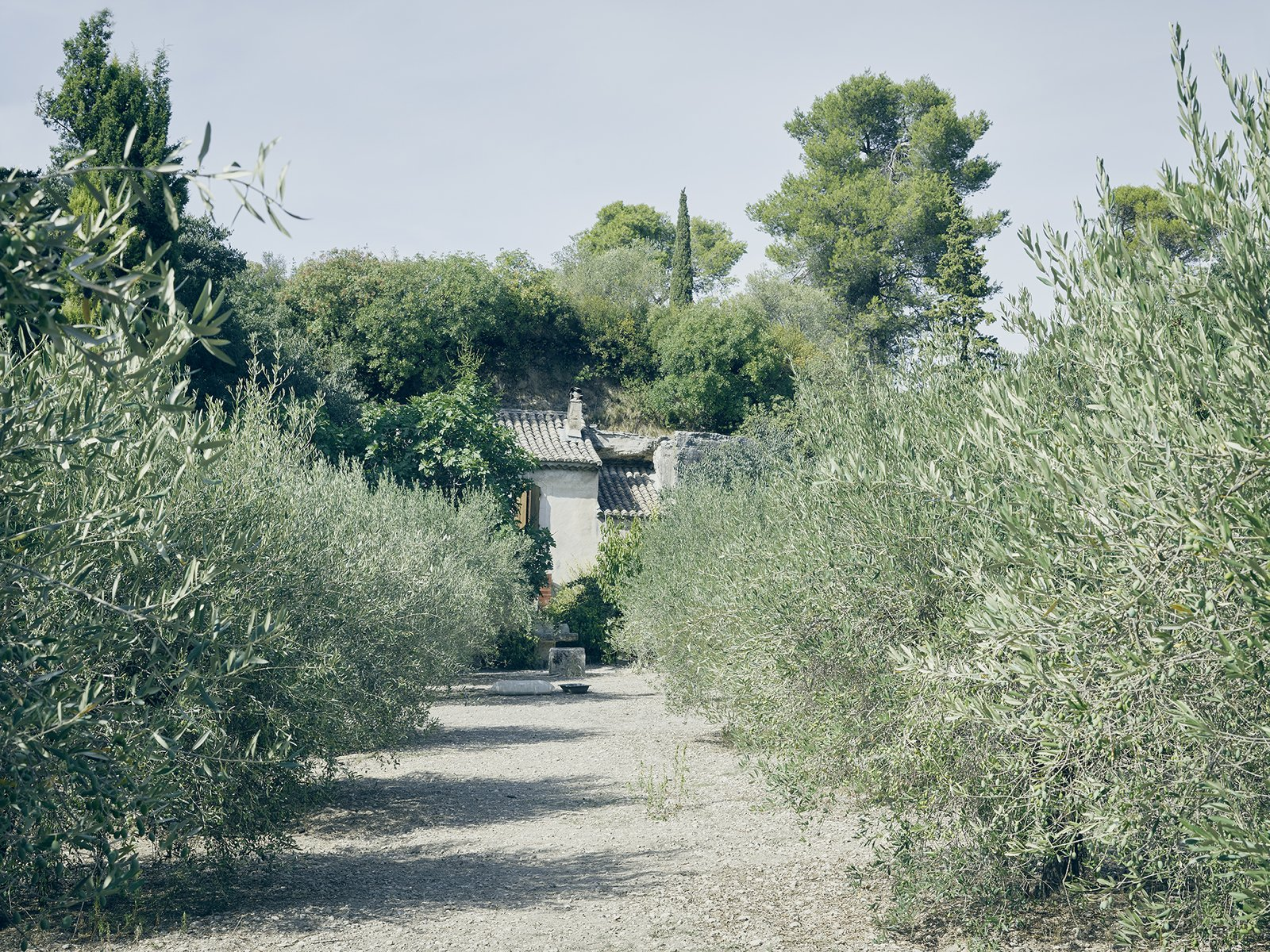 Outdoor An olive grove frames Lolo's farmhouse.  Photo 5 of 19 in Mine Dining