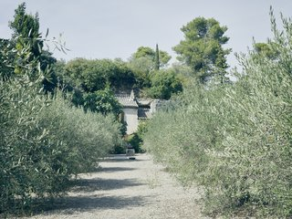An olive grove frames Lolo's farmhouse.