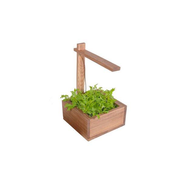 Opus Grow Real Light Box