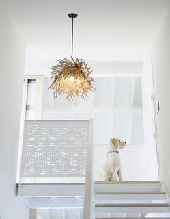 Teddy, an Australian Labradoodle, sits at the landing of the sleeping loft, which is located above the master suite.