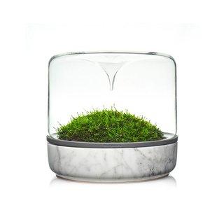 Terrain Botanica Rainforest Kit