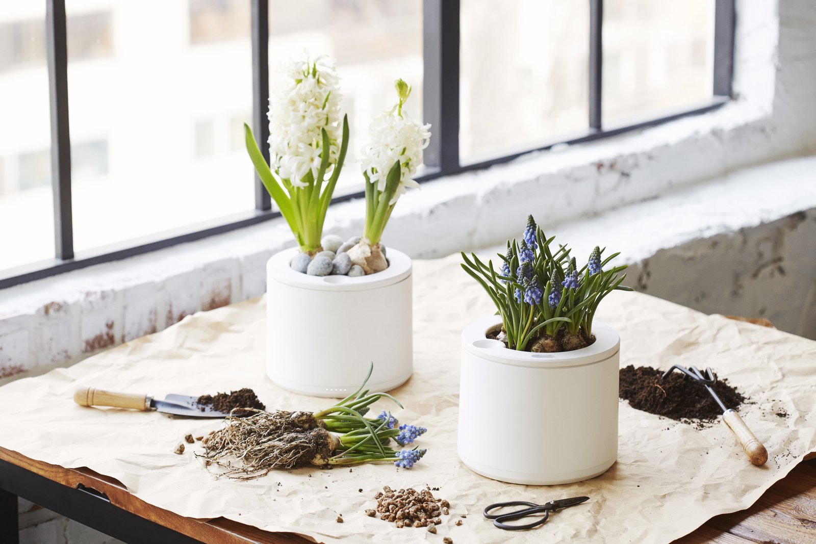 Photo 6 of 10 in Clueless About Gardening? These 5 Smart Planters Can Help