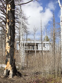 "A brush fire in 2013 destroyed some 40 buildings in the Casper Mountain forest and charred much of the vegetation. ""As the forest returns and the Aspens take over again, we'll have a silvery box that lives under a canopy of green trees,"" says Logan."
