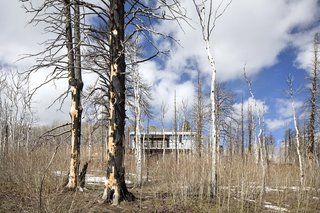 """Because of the fire, the landscape is familiar but different,"" says Logan. While all the mature forest has been destroyed, the Aspens are growing back in what Logan describes as a ""really raw experience in the forest."""