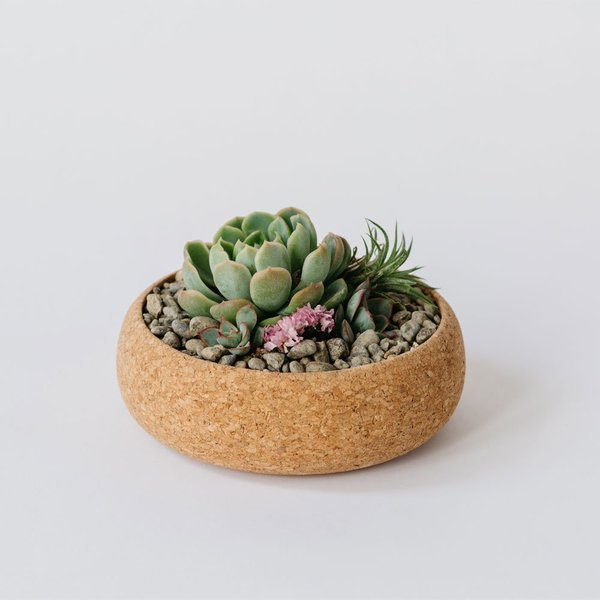Melanie Abrantes Medium Cork Planter