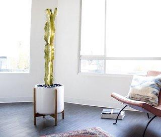 Léon & George Desert Cactus