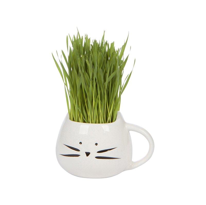 The Cat Ladies Organic Pet Grass Kit