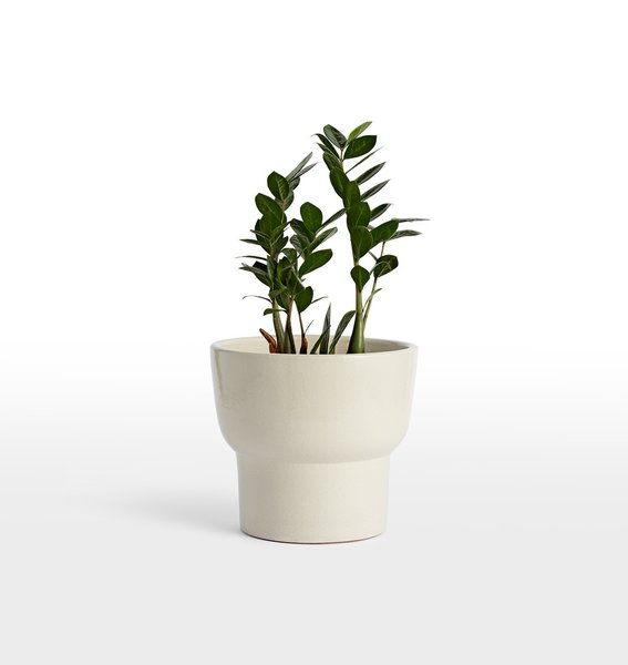 Rejuvenation Brice Medium Planter