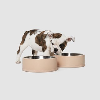 Wild One Tan Dog Bowl