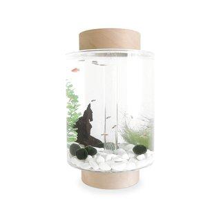 Norrom Paintable Birch Aquarium and Starter Kit