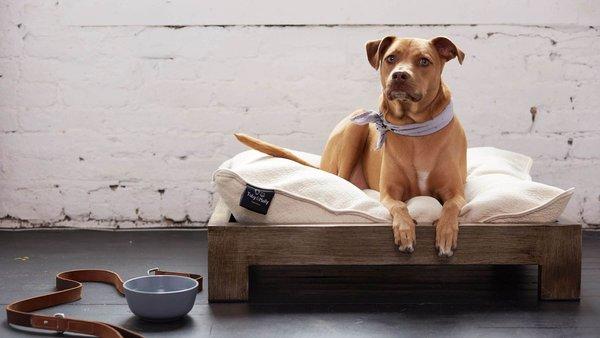 Keetsa Pet Bed & Frame