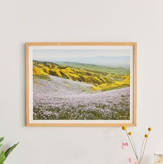 California Wildflowers by Kevin Russ Art Print