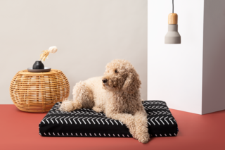 Laylo Black Chevron Pet Bed